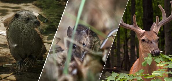 Le retour de la nature sauvage : Les 8 et 9 Avril sur Arte